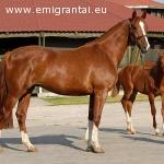 Šveicarijoje ieškomas žirgų prižiūrėtojas